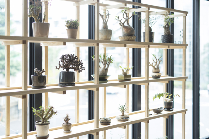 plants_shelf_B1610